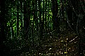 Picture Title - Dark Woods
