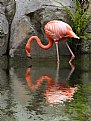 Peaceful Flamingo