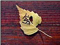 Picture Title - the written leaf