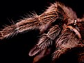 Picture Title - Tarantula Kisses