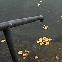 Picture Title - yellow leaves