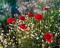 Picture Title - Wild Flowers