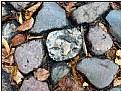 Picture Title - pebble still