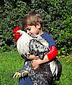 Picture Title - Child and rooster