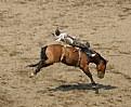 Picture Title - Bareback Rider