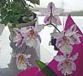 Picture Title - Floral composition