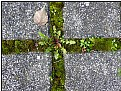 Picture Title - grass cross