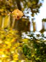 Picture Title - autumnal