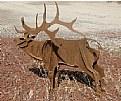 Picture Title - Metal Elk