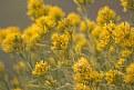 Picture Title - Gelbe Blumen