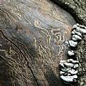 Picture Title - fungi