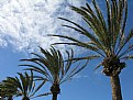 Picture Title - Palm Trees