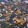 Picture Title - autumnal pond