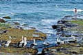 Picture Title - Pelican Pics