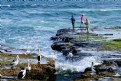 Picture Title - Pelican Pics (II)
