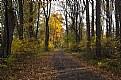 Autumn Trail 1