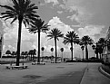 Picture Title - St. Petersburg, FL