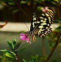 Picture Title - butterfly
