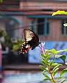 Picture Title - busy butterfly
