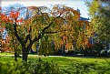 Picture Title - Autumn at Georgetown University