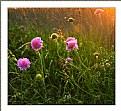 Wild Flowers Hill