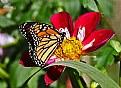 Picture Title - monarch 16