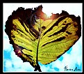 Picture Title - Love heart leaf
