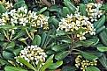 Picture Title - Bush Flowers