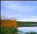 Picture Title - Lake and Reeds
