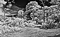 Picture Title - BW Ir...In The Woods