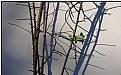 Picture Title - rosebush