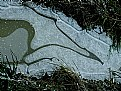Picture Title - Pattern in a Puddle