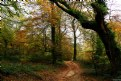 Arbol; otoño; hojas; color; Tree; autumn; leaves; color