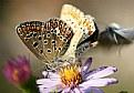 farfalle in festa