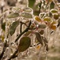 Picture Title - iced