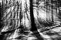 Picture Title - Foggy Forest    II