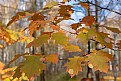 Picture Title - Autum Leaves
