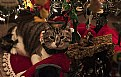 Picture Title - Christmas Cat with Friends.