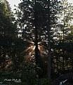Picture Title - Sunrise