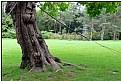 the bondage tree