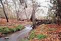 Picture Title - Autumn Stream
