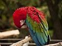 parrot resting