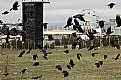 Picture Title - Crows 2