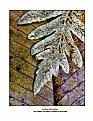 Picture Title - Autumn Companions