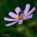 Picture Title - Flower And Bee