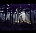 Picture Title - the dark forest