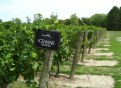 Picture Title - Icewine