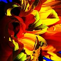 Picture Title - Colorful hand picked Sunflower