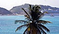 Picture Title - Palm Tree &  Bay