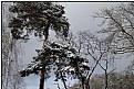 Picture Title - wintergarden